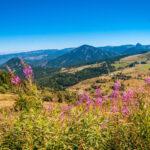 Paysage de montagnes et de fleurs roses en Auvergne